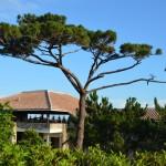 小浜島リゾートはいむるぶし
