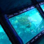 ウミガメに遭遇した日
