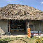 石垣島の有機野菜
